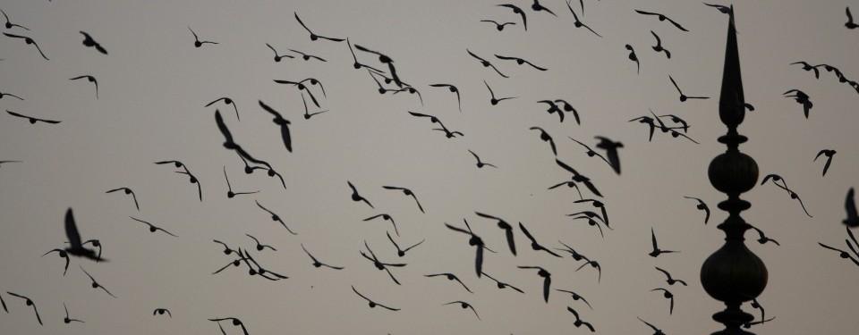 burung-burung-menyambut-pagi-di-kubah-masjid-jami-new-delhi ...